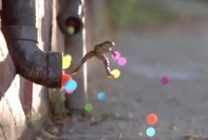 Ein springender Frosch macht aus Produktinformationen emotione Werbung
