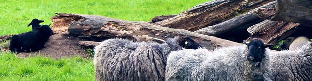Wie erkenne ich schwarze Schafe im Neuromarketing?