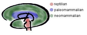 Das triune brain Konzept