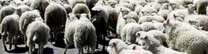 schwarze Schafe im NeuroCounseling