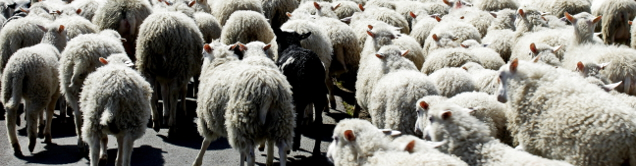 Wie erkenne ich schwarze Schafe im NeuroCounseling?